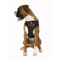 Waffle Dog harness and Lead in Black